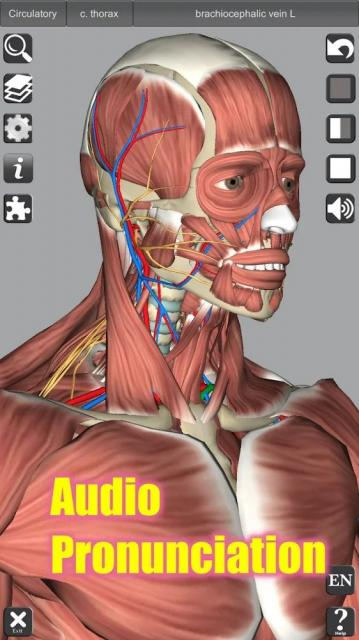 3D Anatomy v5.7 APK (Full Paid) - Download for Android